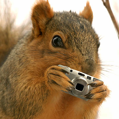 994squirrel_shoots_back
